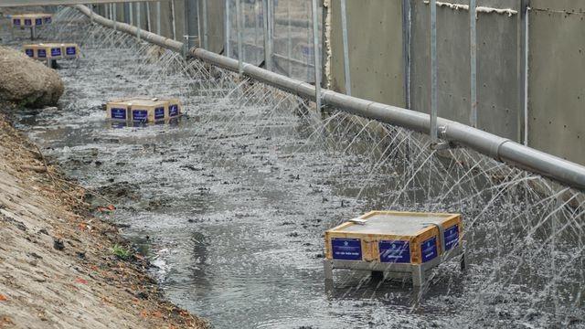 Công nghệ Nhật Bản giúp giảm đáng kể lớp bùn trên sông Tô Lịch - 1