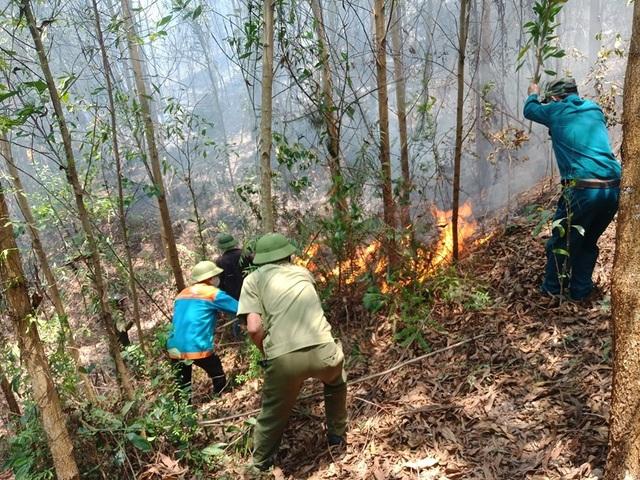 Lại cháy rừng ở Hà Tĩnh - 4
