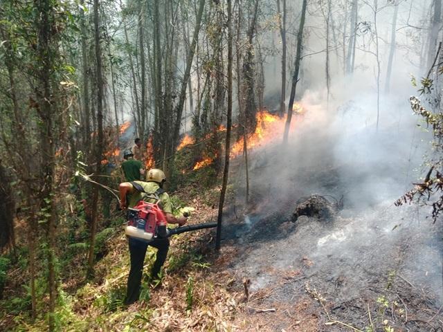 Lại cháy rừng ở Hà Tĩnh - 1