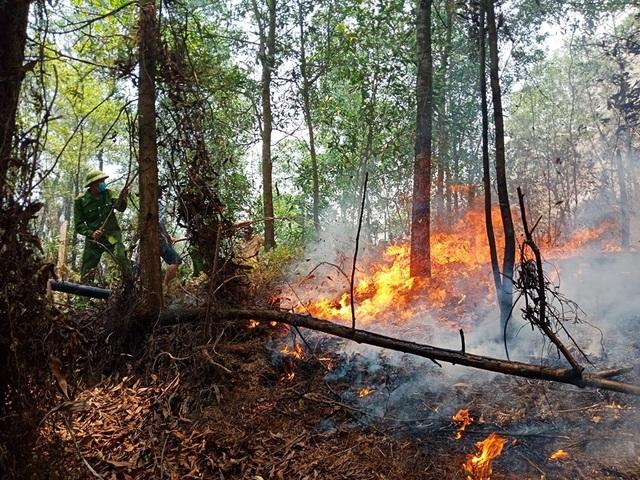 Lại cháy rừng ở Hà Tĩnh - 2