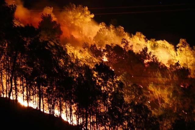 Yêu cầu điều tra hàng loạt vụ cháy rừng nghiêm trọng ở Hà Tĩnh - 1