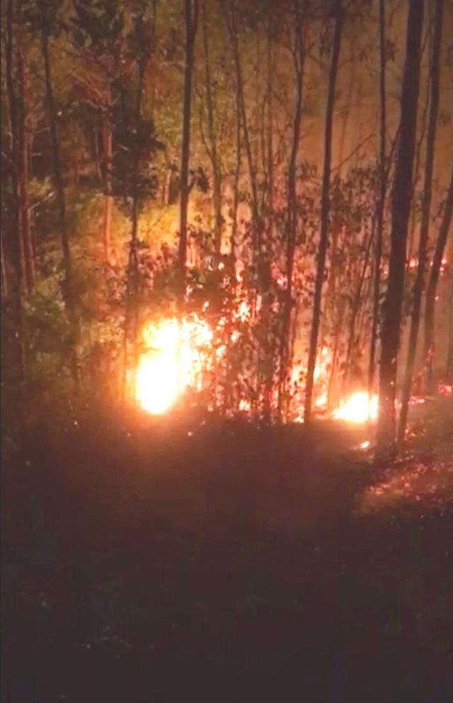 Rừng thông 30 năm tuổi gần lăng vua Khải Định ngùn ngụt cháy trong đêm - 4