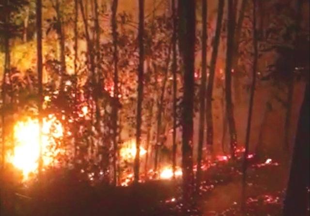 Rừng thông 30 năm tuổi gần lăng vua Khải Định ngùn ngụt cháy trong đêm - 1