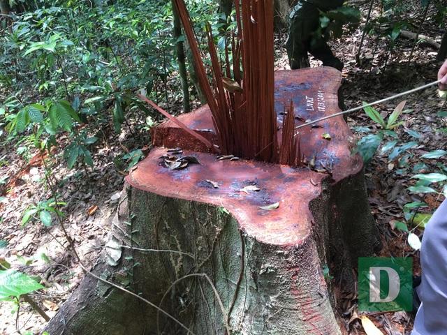 Vụ phá rừng di sản tại Quảng Bình: Sẽ tiếp tục xử lý nghiêm trách nhiệm  - 3