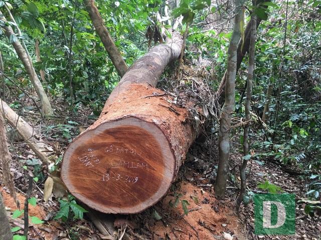 Vụ phá rừng di sản tại Quảng Bình: Sẽ tiếp tục xử lý nghiêm trách nhiệm  - 1