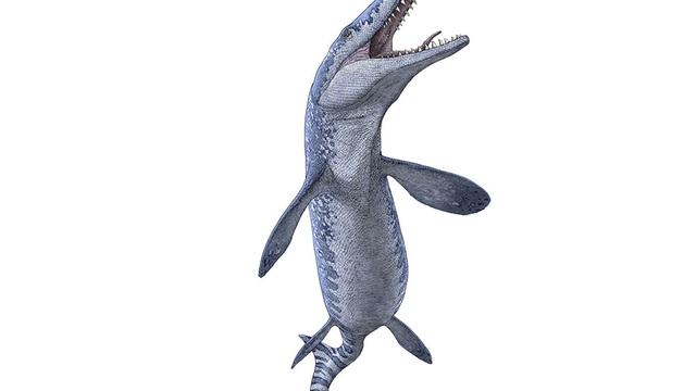 Bất ngờ tìm thấy hoá thoạch quái vật biển cổ đại khi khai thác đá quý - 1