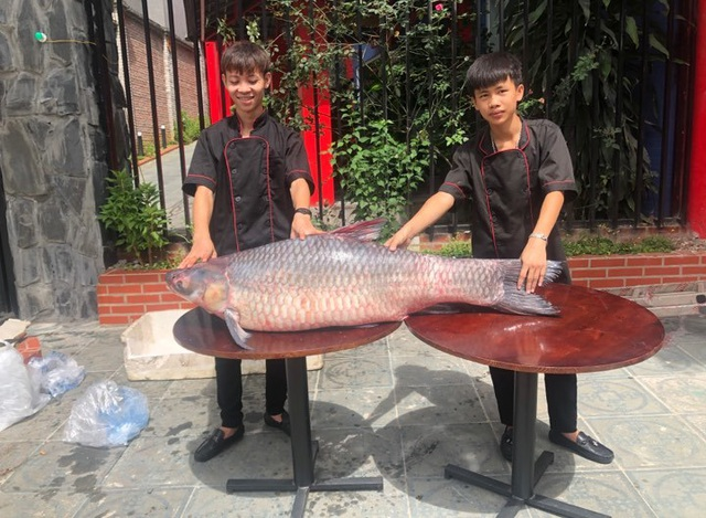 """Bắt được cá trắm đen """"khủng"""" nặng 50kg, dài 1,6m ở Yên Bái - 2"""