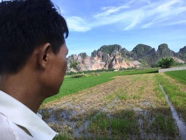 Nhiều hộ dân điêu đứng vì lúa chết sau khi phun thuốc trừ cỏ - 2