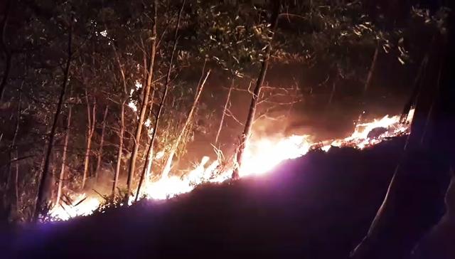 Cháy rừng keo của người dân