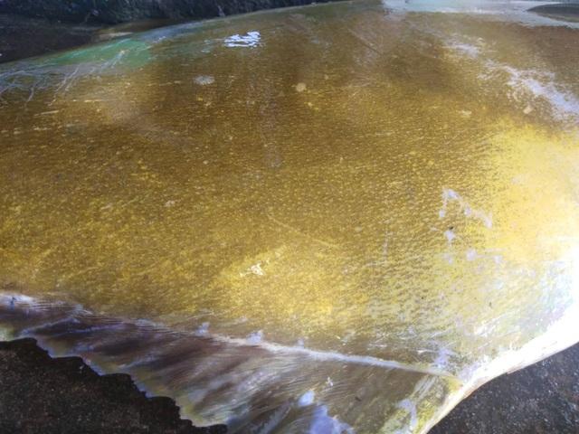 """Cá vàng dương ngon hiếm vừa cập bến, đã được mối buôn """"hốt sạch"""" - 7"""