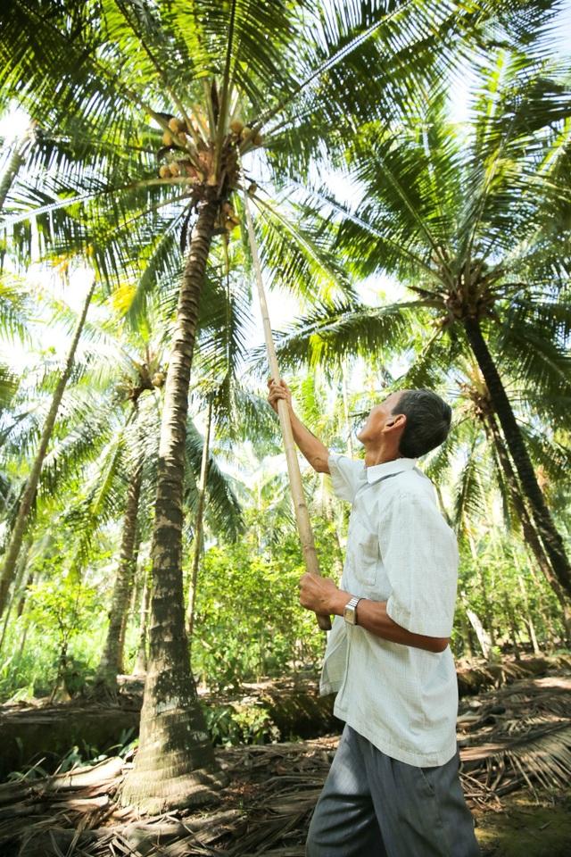 Tăng chuỗi giá trị cây dừa Việt Nam qua sản phẩm nước cốt dừa tươi - 3