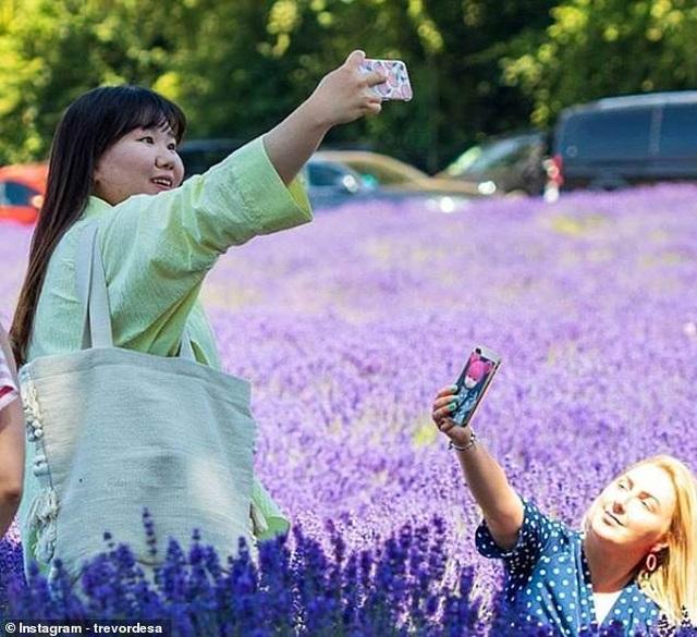 Cánh đồng hoa oải hương tĩnh lặng bỗng chật cứng khách du lịch - Ảnh minh hoạ 3