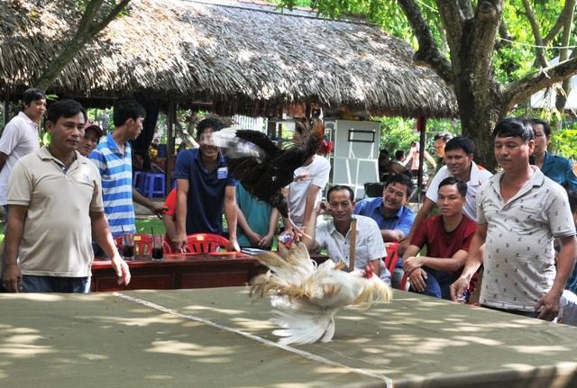 Vượt gần 300km đến Đồng Tháp… thi chọi gà truyền thống - 14