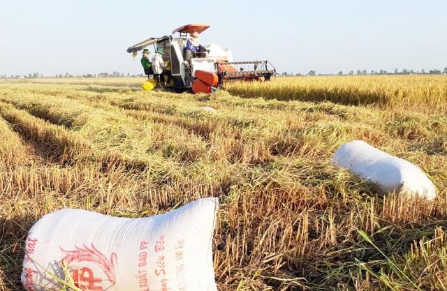 Mua lúa của dân hơn 11 tỉ đồng rồi không trả? - 1