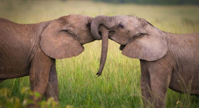 Tìm ra cách tính tuổi thọ của các loài động vật - 1