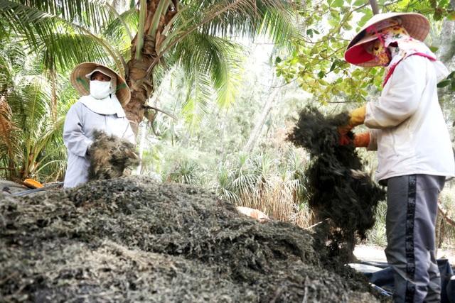 Nhọc nhằn nghề hái rong mơ ở Quảng Nam - 7