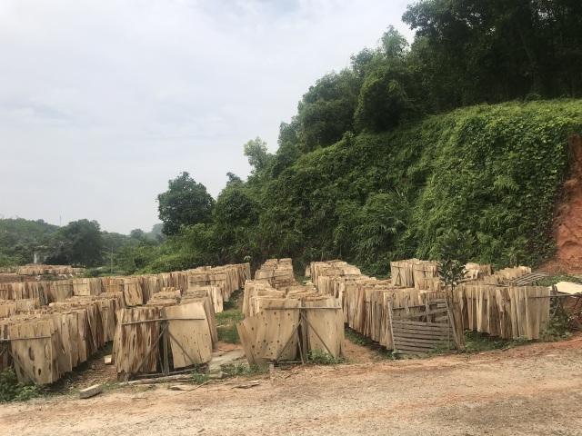 Hệ luỵ xưởng bóc mọc như nấm sau mưa: Chặn cầu tranh nhau từng xe gỗ - 3