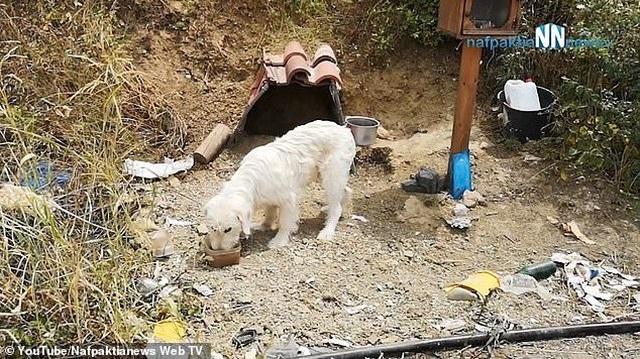Suốt 18 tháng, chú chó trung thành chờ chủ ở nơi xảy ra tai nạn - 4