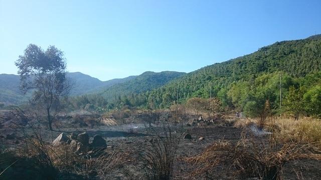 Đà Nẵng: Cháy lớn ở rừng tràm dưới chân núi Sơn Trà - 5