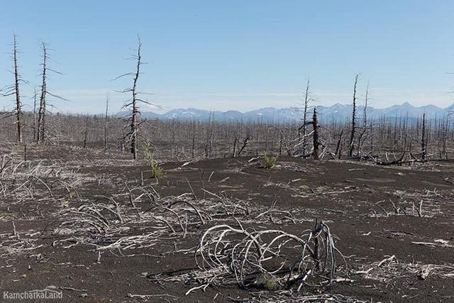 Điều gì sẽ xảy ra nếu chúng ta biến toàn bộ sa mạc Sahara thành rừng? - 6