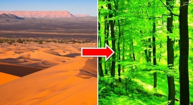 Điều gì sẽ xảy ra nếu chúng ta biến toàn bộ sa mạc Sahara thành rừng? - 3