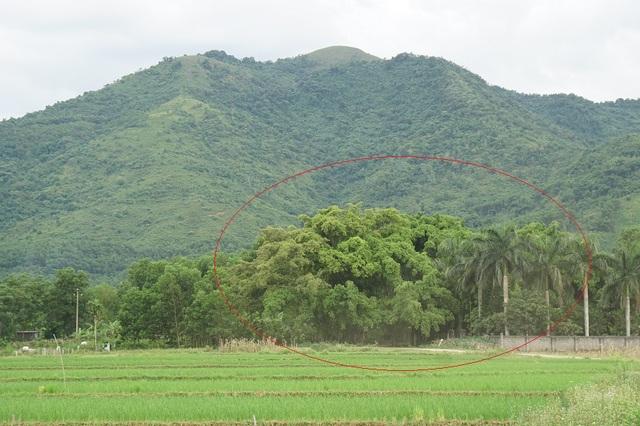 """Tận mắt chiêm ngưỡng độ """"khủng"""" của cây sanh hơn 800 năm tuổi trong phim Ma làng - 1"""