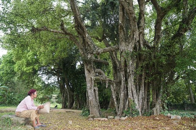 """Tận mắt chiêm ngưỡng độ """"khủng"""" của cây sanh hơn 800 năm tuổi trong phim Ma làng - 3"""