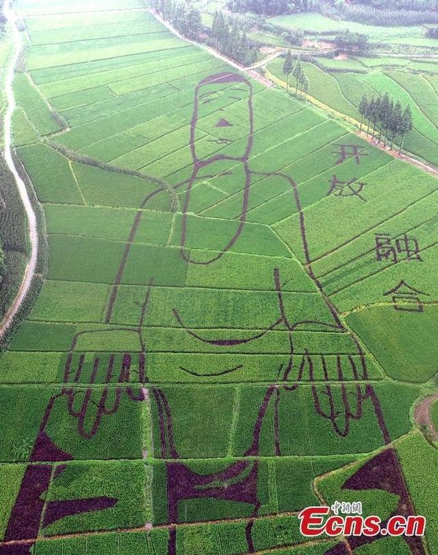 """Tượng Phật dài 100m """"tạc"""" trên ruộng bậc thang - 1"""