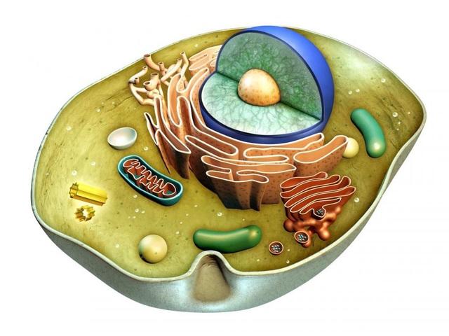 Xét nghiệm ADN và những điều cần biết? - 1