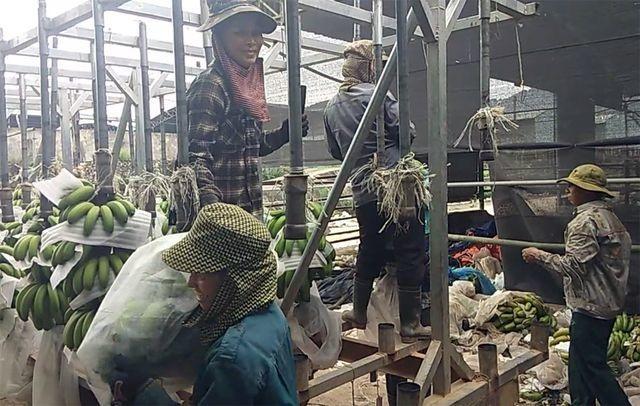"""Dự án nuôi bò 4.500 tỷ liên quan con trai ông Trần Bắc Hà """"trôi êm"""" tại kỳ họp HĐND tỉnh - 2"""