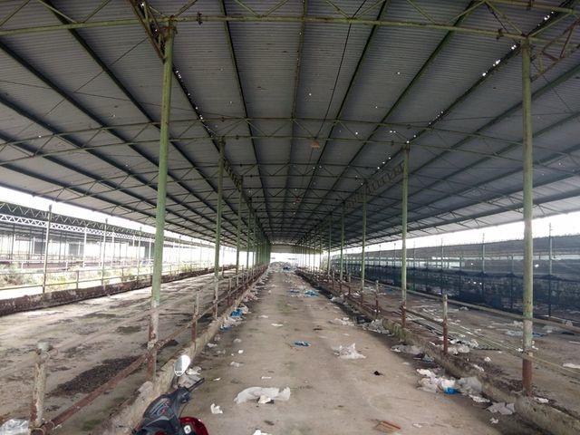 """Dự án nuôi bò 4.500 tỷ liên quan con trai ông Trần Bắc Hà """"trôi êm"""" tại kỳ họp HĐND tỉnh - 1"""