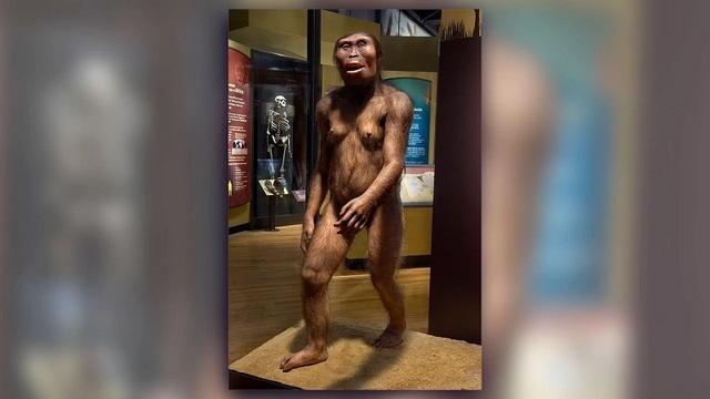 Vì sao không phải loài linh trưởng nào cũng tiến hóa thành người? - 2