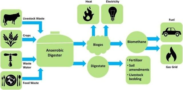 Nhiêu liệu sinh học low-carbon: Nhiều thân thiện môi trường - 2