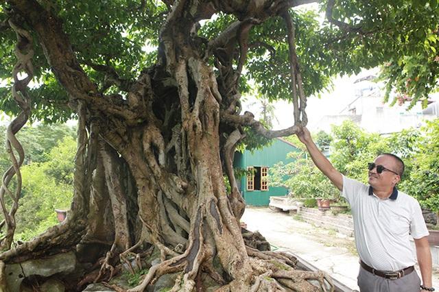 Sanh cổ có rễ như củ nhân sâm, khách trả 100 cây vàng chủ nhân vẫn lắc đầu - 15