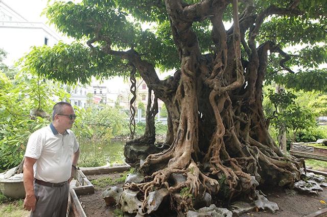 Sanh cổ có rễ như củ nhân sâm, khách trả 100 cây vàng chủ nhân vẫn lắc đầu - 18