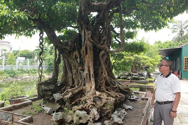 Sanh cổ có rễ như củ nhân sâm, khách trả 100 cây vàng chủ nhân vẫn lắc đầu - 4