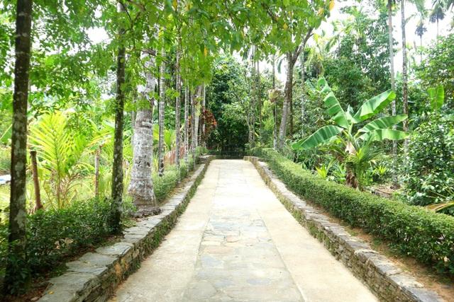 Đặc sản chuối ép ở Quảng Nam