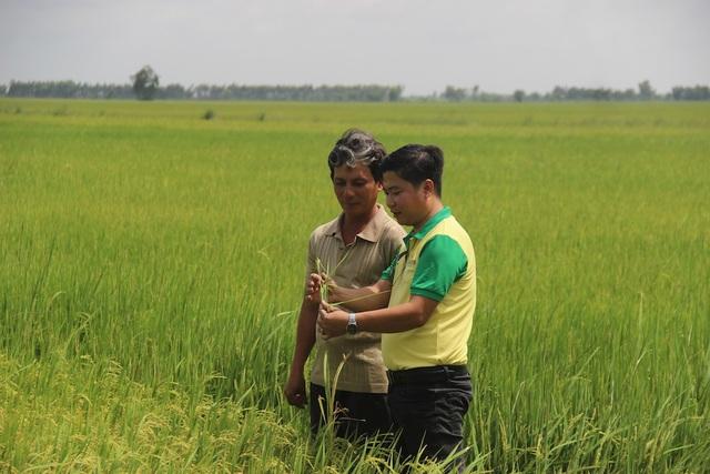 Giải pháp cho nông dân khi nông sản rớt giá - 1