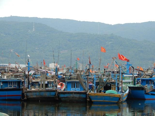 Hàng loạt tàu cá Đà Nẵng nằm bờ vì chiều dài dưới 15m - 2