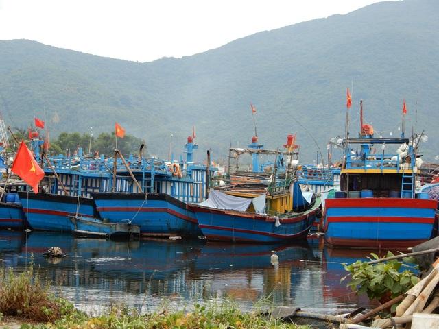 Hàng loạt tàu cá Đà Nẵng nằm bờ vì chiều dài dưới 15m - 1