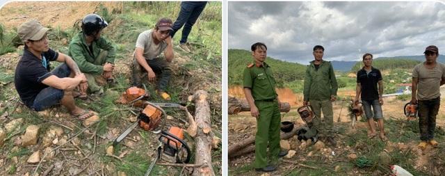 Ngang nhiên mang cưa máy triệt hạ rừng thông để chiếm đất - 1