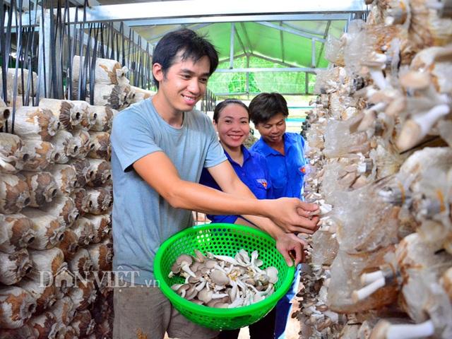 Kiên Giang: Bỏ việc thành phố về quê trồng nấm bào ngư Nhật Bản - 1