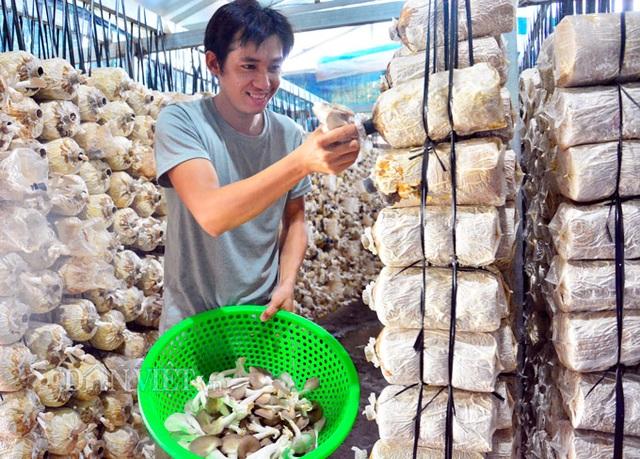Kiên Giang: Bỏ việc thành phố về quê trồng nấm bào ngư Nhật Bản - 2