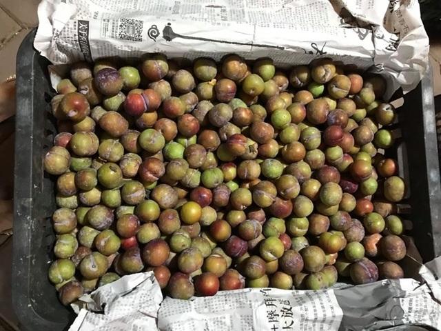 Lừa bán đặc sản Sa Pa, dân Việt ăn hết 3.000 tấn mận Trung Quốc - 1