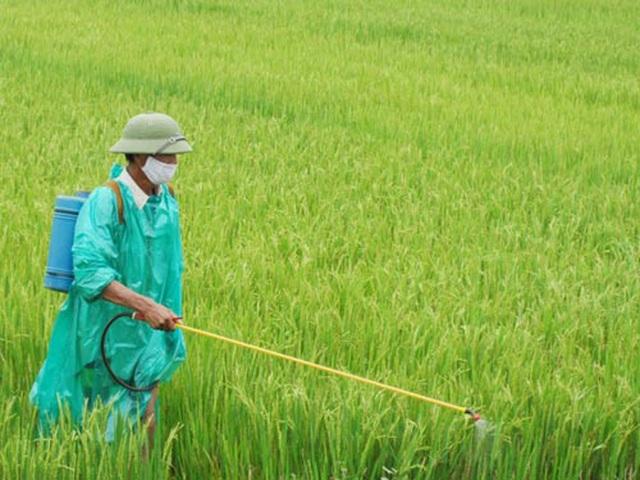 Nông dân gieo xuống đồng ruộng trên 120 nghìn tấn thuốc bảo vệ thực vật và phân hóa học mỗi năm - 1