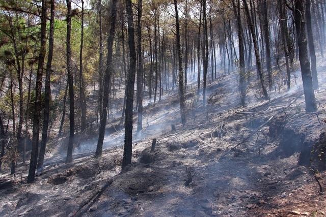 Rừng thông hàng chục năm tuổi bốc cháy dữ dội - 4