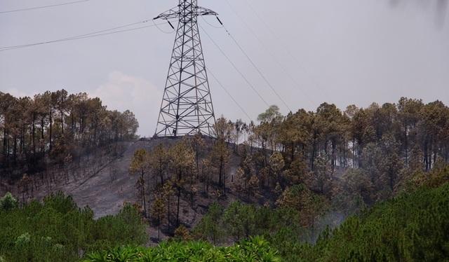 Rừng thông hàng chục năm tuổi bốc cháy dữ dội - 5