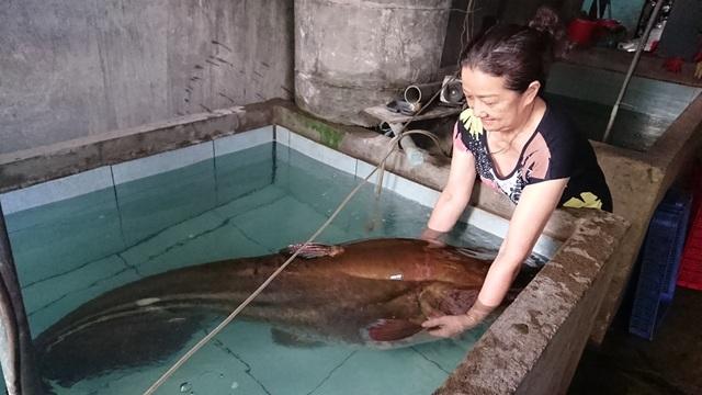 """Cần thủ câu được con cá leo """"khủng"""" nặng 80kg - 1"""