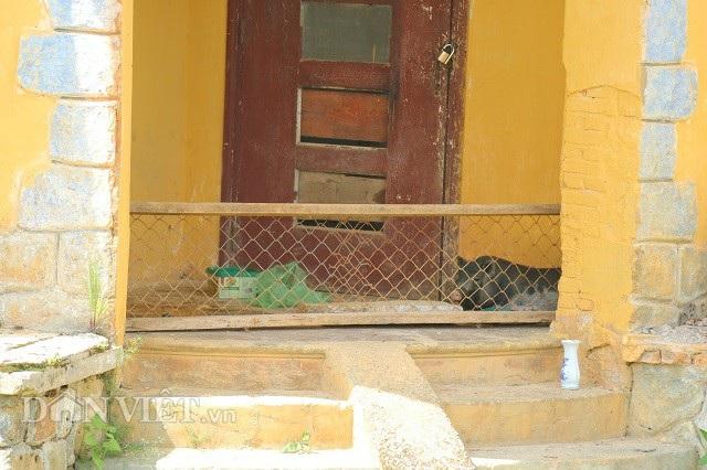 Kỳ lạ biệt thự cổ ở Đà Lạt chỉ để nuôi lợn - 4