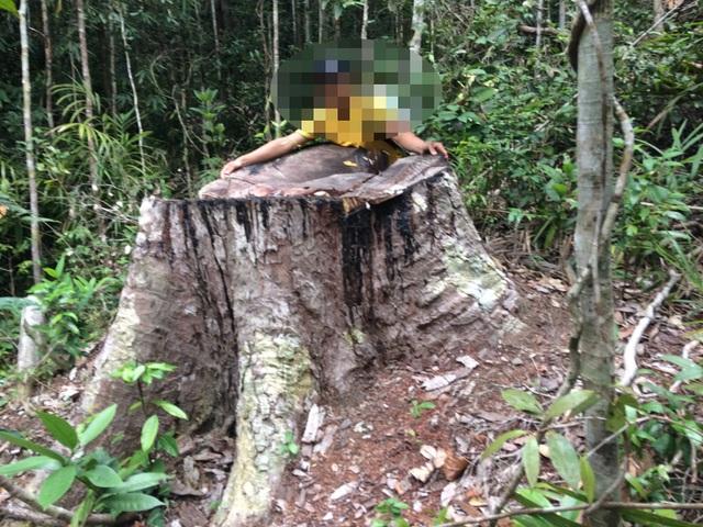 Cận cảnh cánh rừng cổ thụ bị xẻ thịt tan hoang tại Gia Lai! - 10